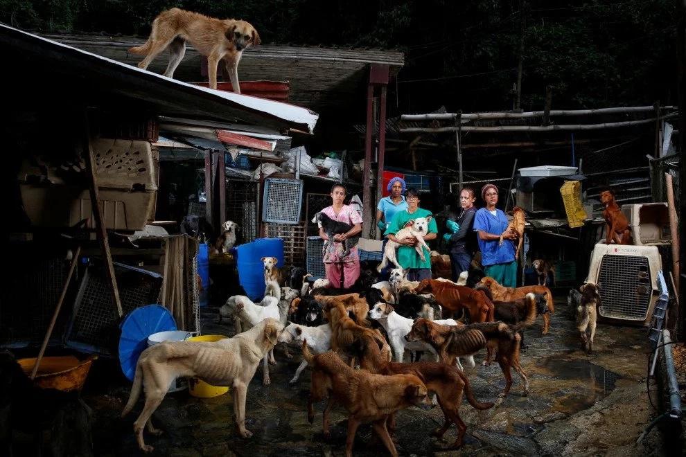 Abandonan a perros en Venezuela por crisis económica
