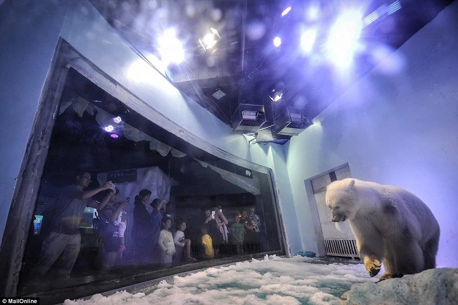 """Miserable story of """"the world's saddest polar bear"""" trapped inside Chinese mall will break your heart"""