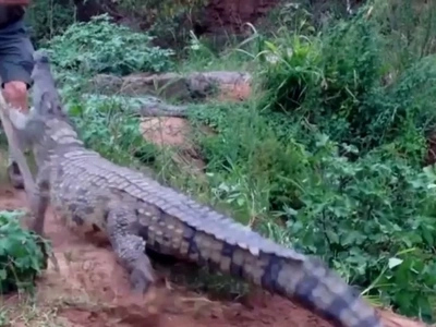 Don't be this guy! Man severally pokes crocodile with large stick, nearly loses his foot