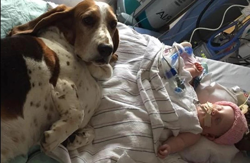 Mom's Moving Tribute As Baby Girl Whose Pet Dogs Refused To Leave Her Bedside Dies