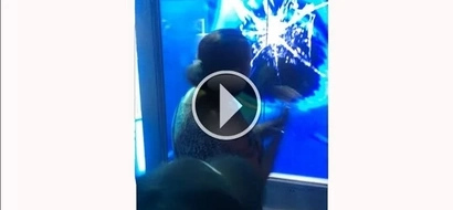Grandma gets shocked as a shark tries to attack her through tank glass