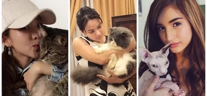 Here are the names of 9 Pinoy celebrities who love cats as their pet friend