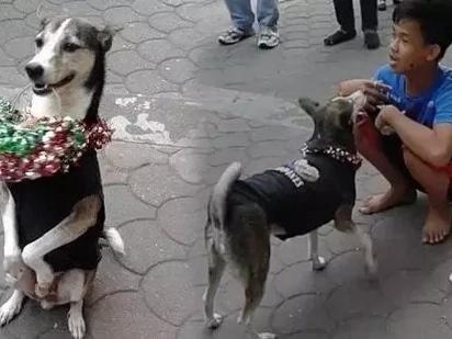 Amazing dog near LRT station sends boy to school by performing tricks