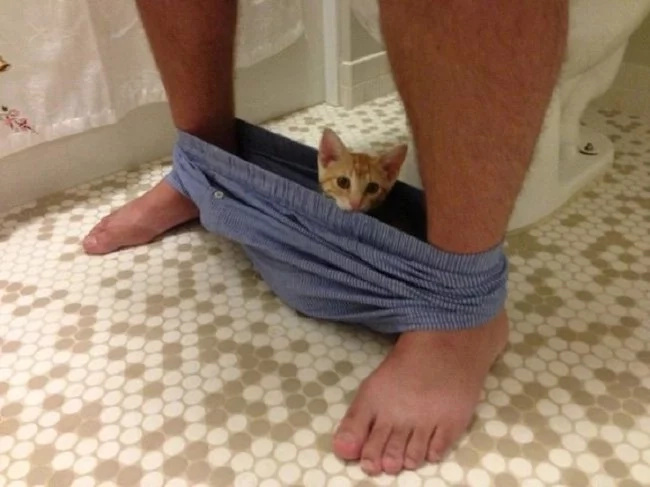 Why your cat always goes to the bathroom with you? THIS is the reason!
