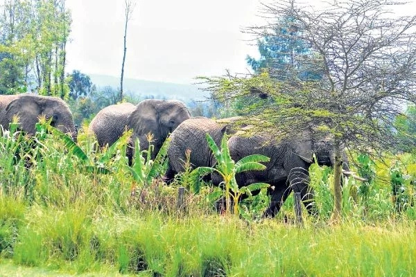 Drought makes wild animals do the unthinkable in Lamu