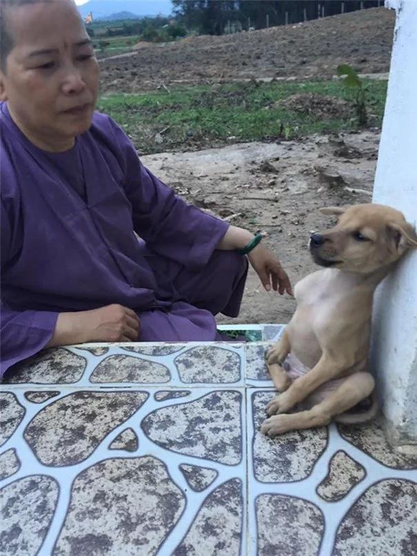 Estos cachorros no dejan de abrazarse desde su rescate