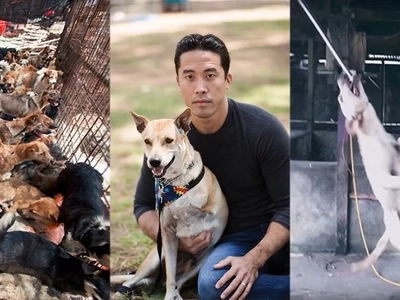 Mga walang puso! Negligence of Hollywood fundraiser causes the death of around 1,000 rescued dogs