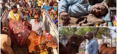 Cow-obsessed man left his family to live with cows, drinks cow urine and eats dung