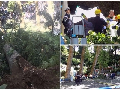 See terrifying moment 200-year-old oak tree crashes down on religious festival goers, killing 13