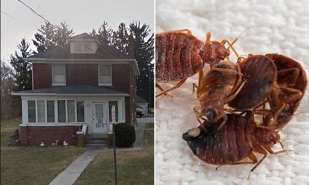They were on the walls, sheets, pillows! BED BUGS kill 96-year-old woman at her caretaker's home