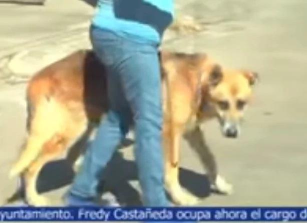 Este perro estuvo 20 días en el panteón con su dueño sepultado