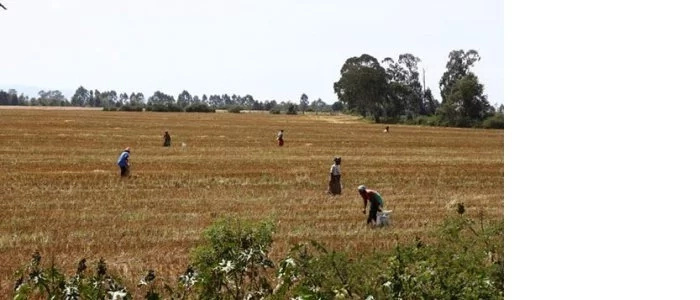 The piece of land that the Kibaki family wants to sell. Photo: Standard.