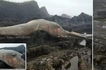 MASSIVE whale corpse washes up on beach SHOCKING locals