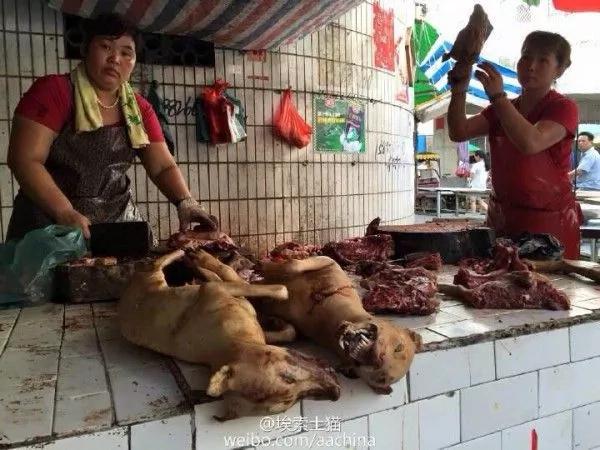 Festival de la carne de perro