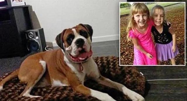 Boxer salva a niña de 5 años del ataque de otro perro