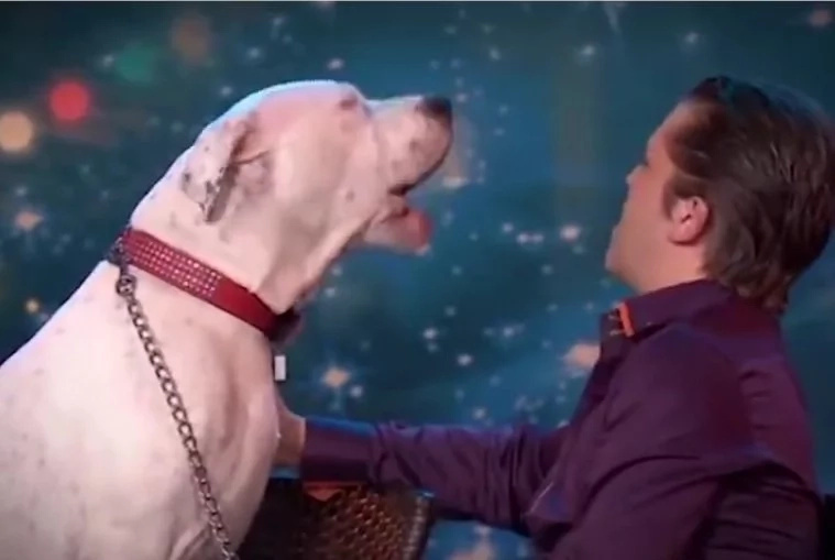Dog sings Whitney Houston hit in viral video