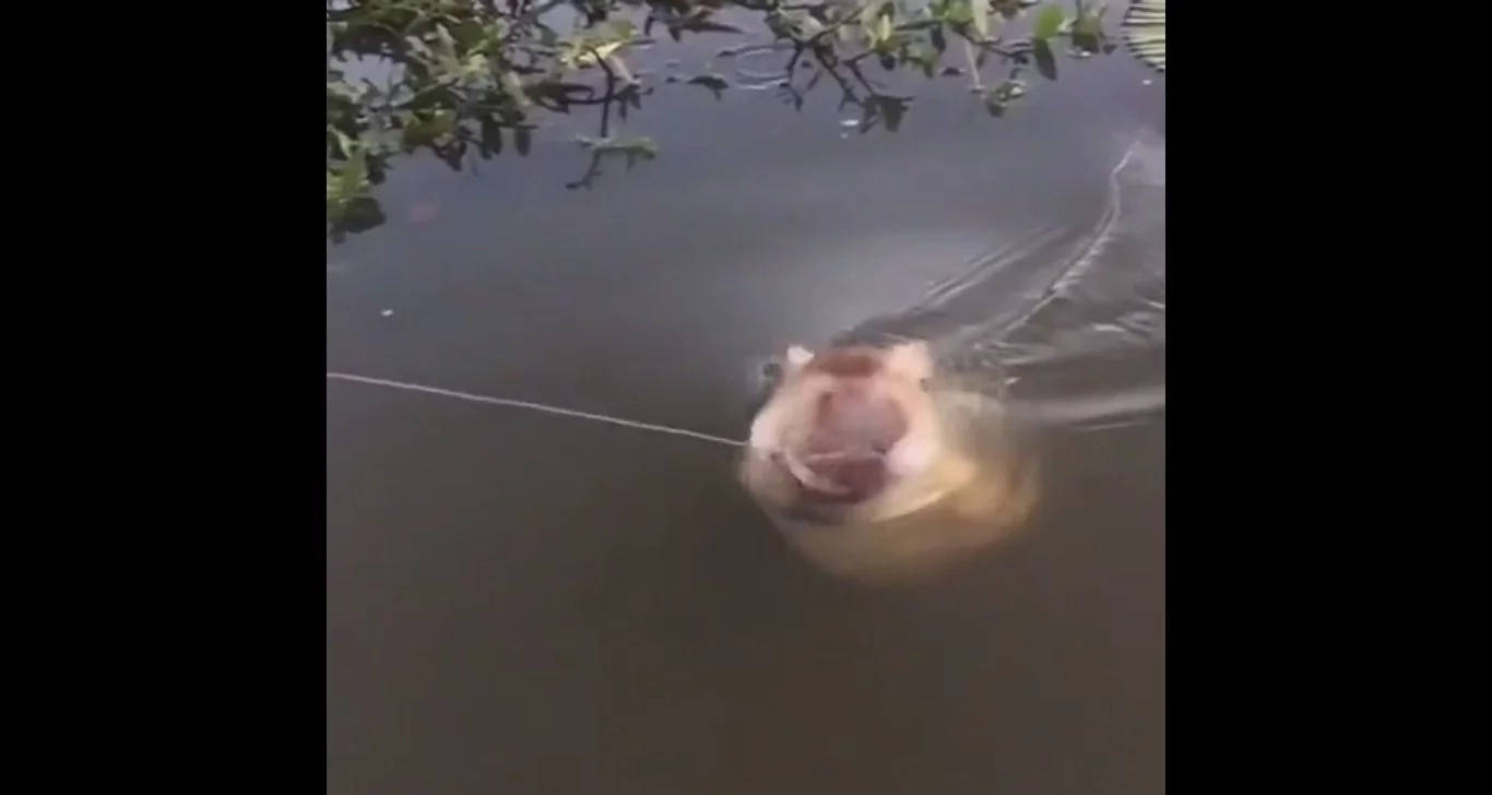 Man Reels In A Once-In-A-Lifetime Catch, And Things Get Scary Fast