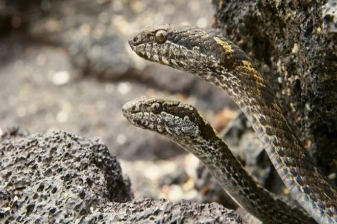 snakes-iguana-viral