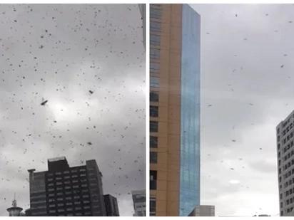 Netizen catches eerie scene of hundreds of bees flying around Ortigas