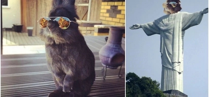 Somebody Put Sunglasses on a Cute Bunny and Internet Went Totally INSANE(10+ Pics)