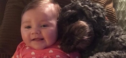 Brave dog dies after protecting an 8-month old baby from fire