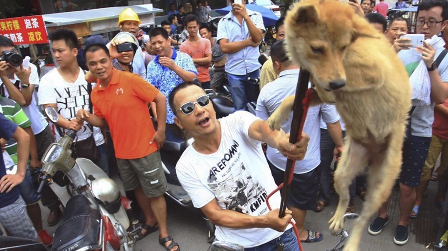 China's controversial dog-meat festival ended