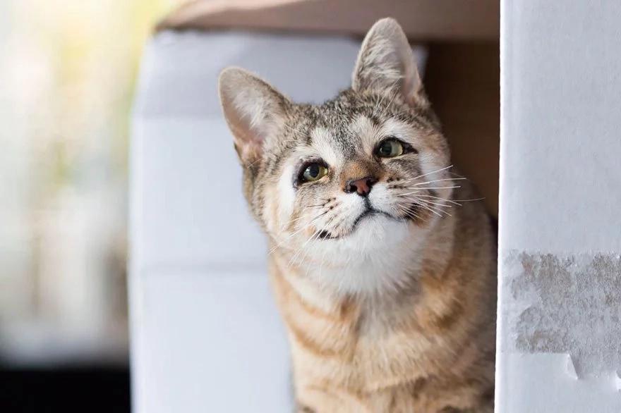 Las tiernas imágenes de estos gatos felices después de haber nacido sin párpados te harán emocionar