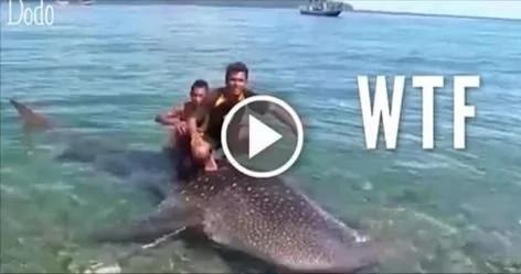 Tiburón ballena fue torturado horrendamente por turistas ignorantes