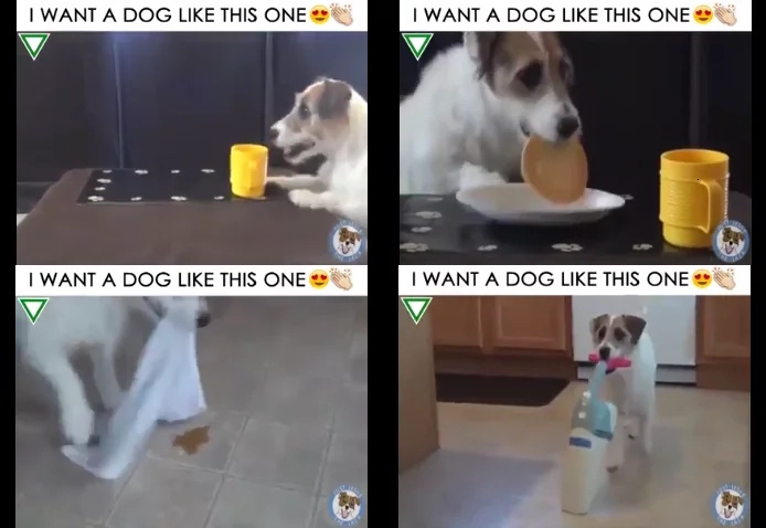 Useful dog trick video has charmed netizens anywhere in the globe