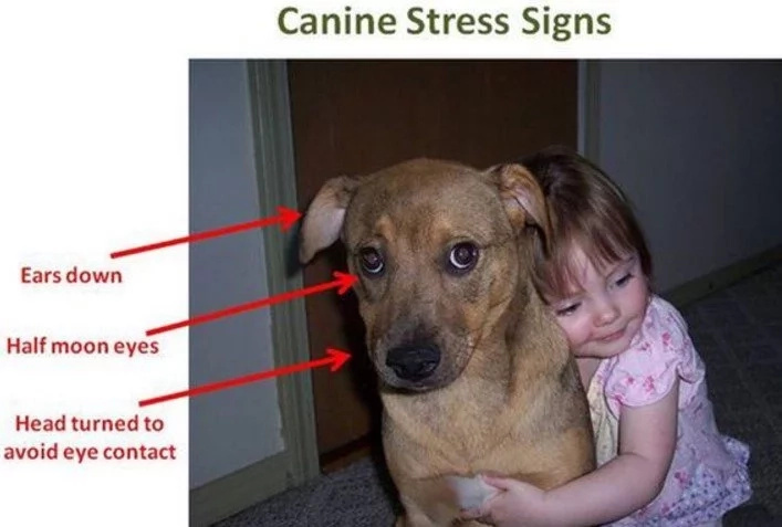 This Is Why Scientists Say You Should NEVER Hug Your Dog