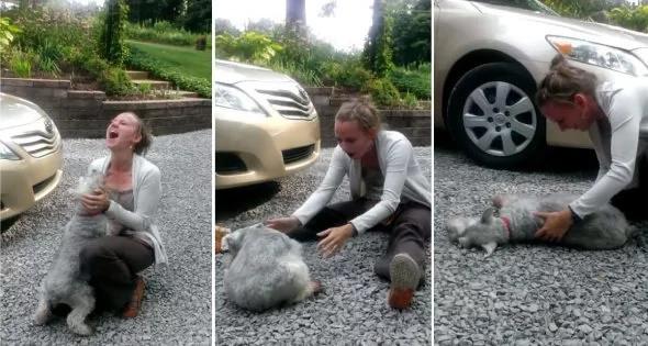Perro llora y se desmaya durante el reecuentro con su dueña