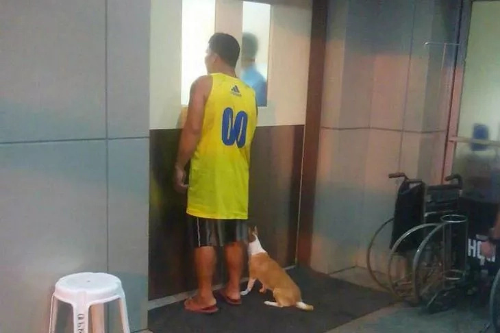 Meet the Hachiko of Davao; her story will make you cry