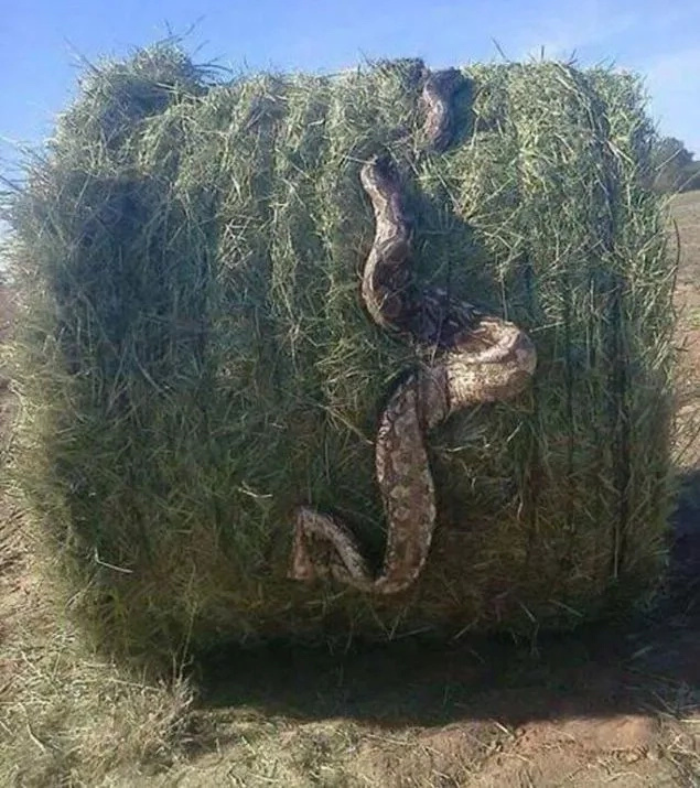 9 scary photos of snakes that will haunt you