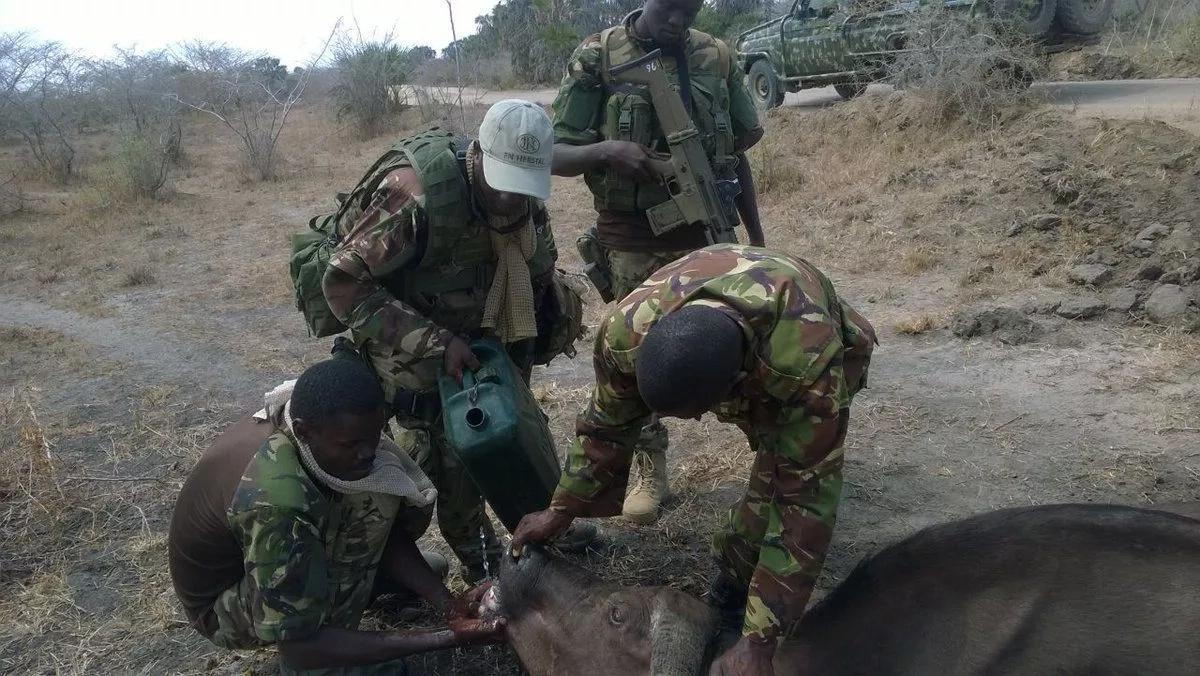 These soldiers save DYING buffalo in the midst of scorching Kenyan drought (photos)