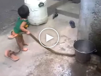 Fearless Child Caught Playing With a Dangerous Cobra. Where are his Parents?