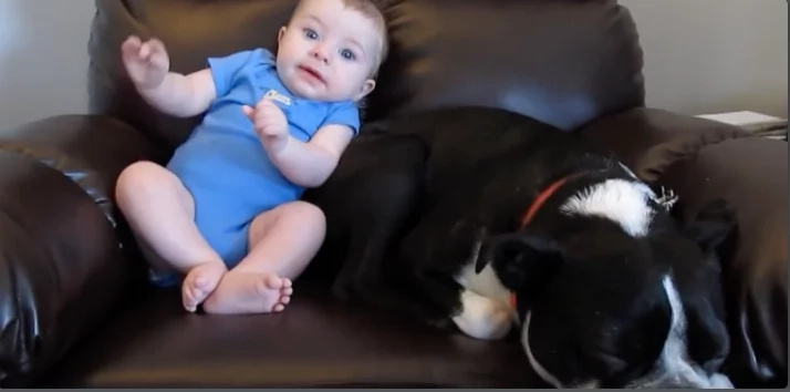 Toddler Poops Her Pants. Now Watch The Dog's Face When He Realizes