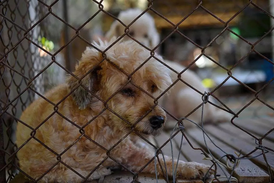 Dog Farms in Kenya: Profitability, Action Plan, Tips and More