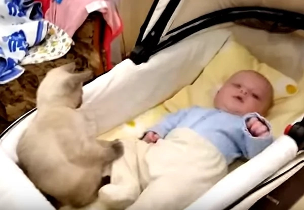 This baby's reaction to his cat is adorable! Watch this amazing video!