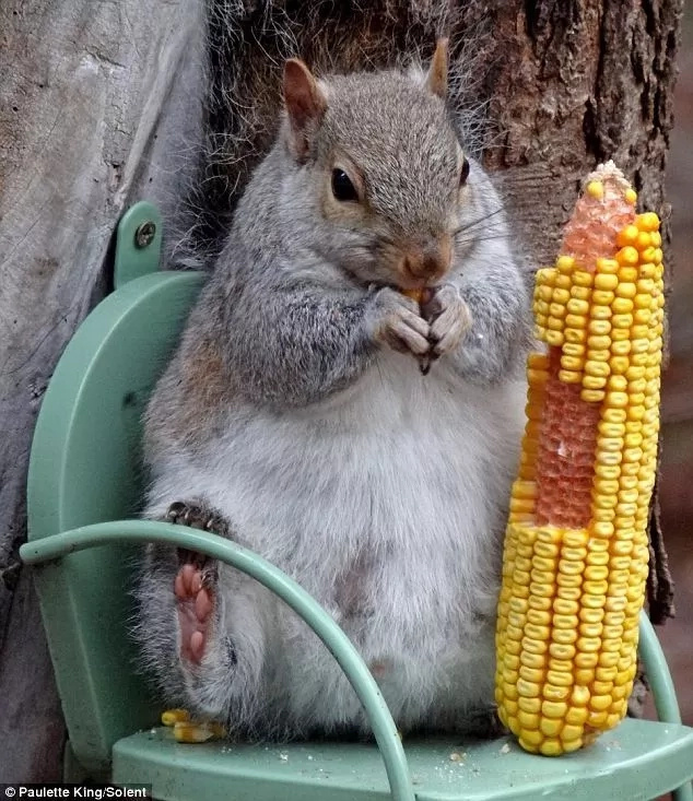 Squirrel chairs on trees are becoming something common thanks to nature-loving people