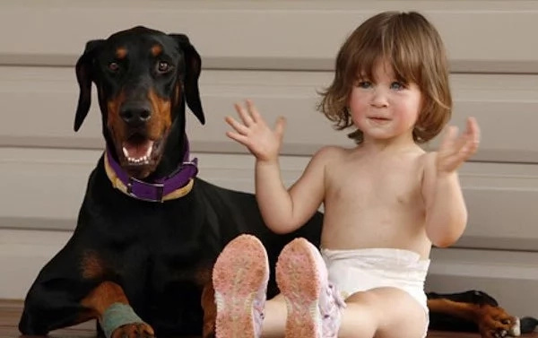 2-Year-Old Girl Was Playing With Doberman. Suddenly The Dog Snarled And Rushed To The Baby...