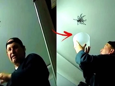 Brave daddy tried to catch a huge spider in his house in front of his daughter. He freaked out when the scary creature fought back!