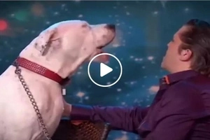 This talented dog shocked the internet after his video singing a Whitney Housten hit went viral