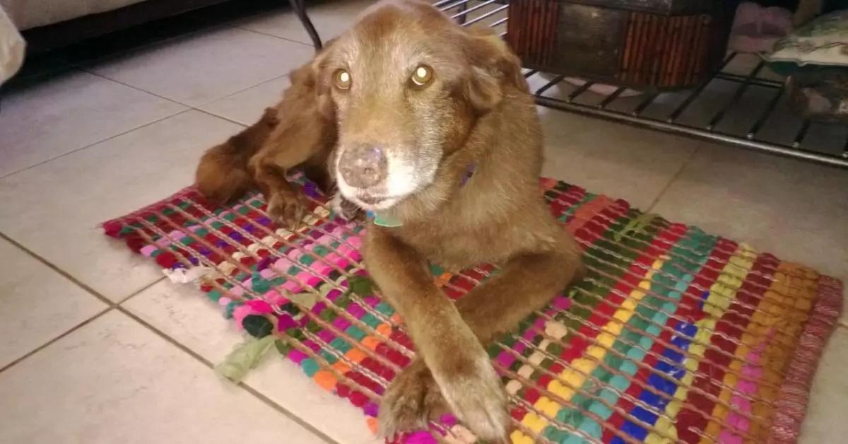 Esta mujer era demasiado perezosa para cuidar de su perra y por eso decidió deshacerse de ella. Lo que pasó después es SORPRENDENTE