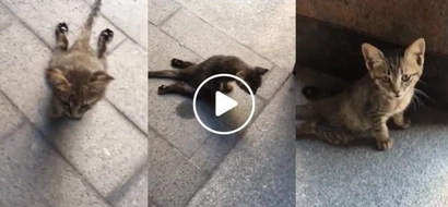Netizen cries help for this poor kitten crippled by heartless human who recklessly drove over it