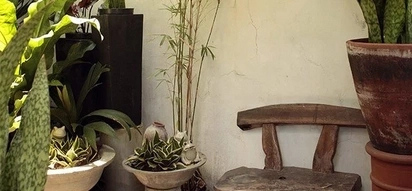 How to build a pocket garden with a short budget