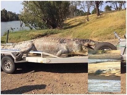 A gigantic 5.2 meter crocodile brutally shot dead amid uproar on increasing croc population