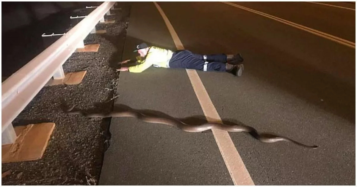 Instead of killing it, see what man did to python he saw on a highway (photo)