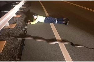 Man takes picture with MASSIVE 2.5-metre python after saving it as it crossed a road (photo)