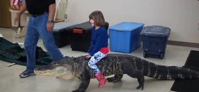 Shocking Video Of A Child Riding A Giant Alligator Is Going Viral