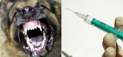 Dog finally punished for KILLING president's son